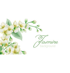 Watercolor green jasmine flowers banner with place vector