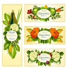 Fresh vegetable banner set with copy space vector image vector image