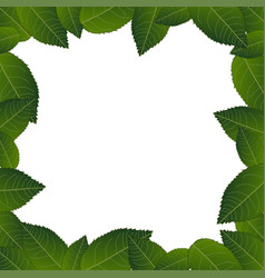 Camellia leaves frame border vector