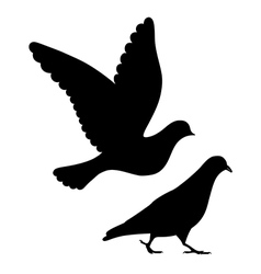 Going flying pigeons black silhouette vector image
