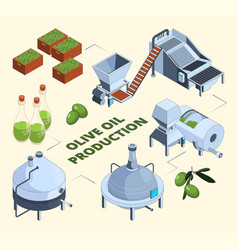 olive manufacturing oil production processes vector image