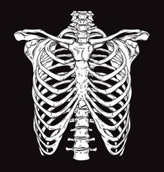 hand drawn line art human ribcage vector image