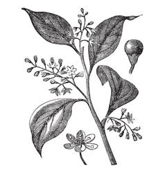 Camphor Floral Engraving vector image vector image