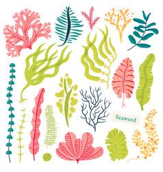 Sea plants and aquatic marine algae seaweed set vector