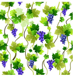 Blue grapes pattern vector