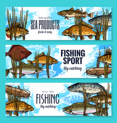 Fishes sketch banners fishing sport market vector