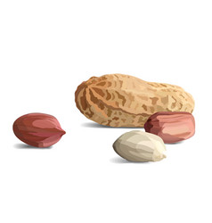 Peanuts in realistic style organic snack close up vector