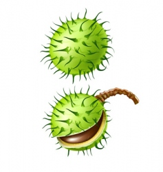 chestnut seed fruits isolated vector image vector image