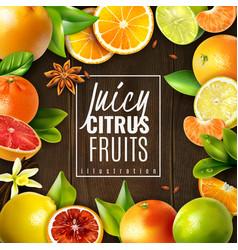 citrus fruit background vector image
