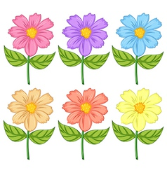 Six colorful flowers vector image
