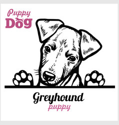 A greyhound dog puppy peeked over fence vector