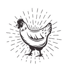 chicken with sunbursts rays vector image