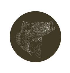 Largemouth bass scratchboard vector