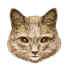 portrait a fluffy cat sketch vintage vector image