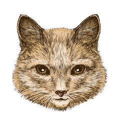 portrait of a fluffy cat sketch vintage vector image