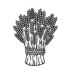 sheaf of wheat vector image