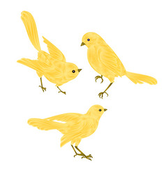 Singing gold birds canary vintage set two vector