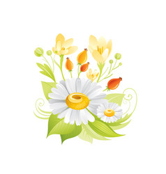spring daisy crocus honey flowers floral icon vector image