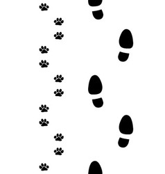 shoes and paws vector image vector image