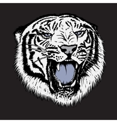 Head of white tiger vector image vector image