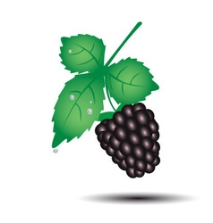 Colorful blackberry summer fruit with leaf eps10 vector