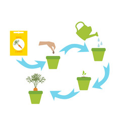 plant growing vector image