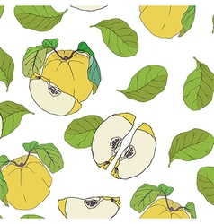 Quince with leaves pattern on transparent backgrou vector