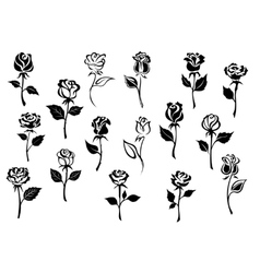 Black and white roses flowers vector image