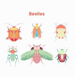 set drawn beautiful beetles vector image