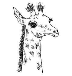 Cute giraffe cub vector