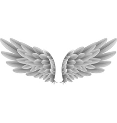 Natural white goose wings isolated background vector image