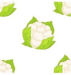 Cauliflower vegetable seamless pattern organic vector