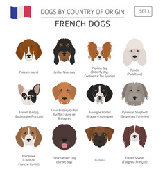 dogs by country of origin french dog breeds vector image