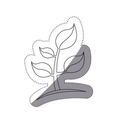 figure plants with leaves icon image vector image