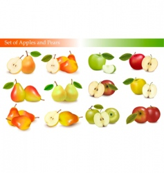 set of pears and apples vector image
