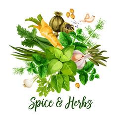 Spice herbs and seasonings vector