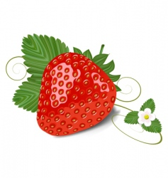 strawberry with leaves and flowe vector image vector image