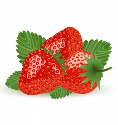strawberry isolated on white vector image vector image