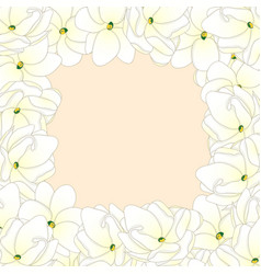 arabian jasmine border vector image