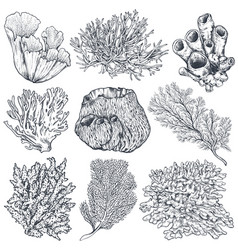 collection hand drawn ocean plants and vector image