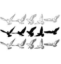 flying pigeons set vector image