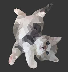 Poly cat vector