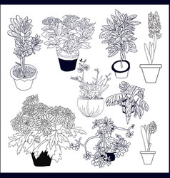 set of different house plants on white background vector image