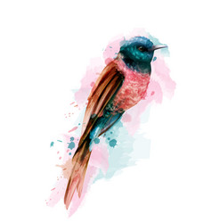 tropic colorful small bird watercolor cute vector image