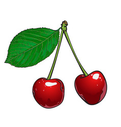 two red cherries on a white background vector image