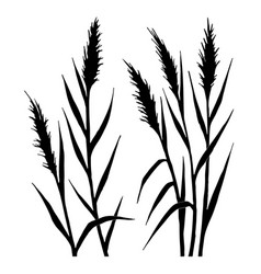 silhouette of the reed vector image