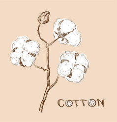 cotton branch vector image vector image