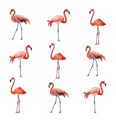 Flamingo birds pattern vector