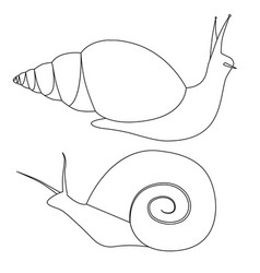 set outline snails various shapes objects vector image