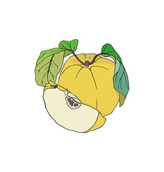 Yellow Quince vector image
